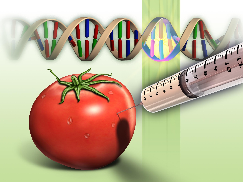 Истината за ГМО храните